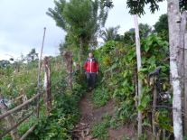 On a garden path (North Sumatra, 2012)